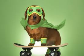 Skateboard Halloween Costumes Halloween Pet Safety Tips Beverly Hills Veterinary Associates