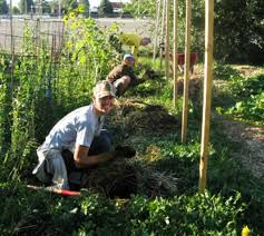 community gardens may produce more than vegetables sciencedaily