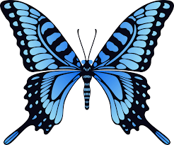 butterfly png image free picture download butterfly nails