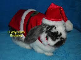 Halloween Costumes Bunny Rabbits Rabbitcostumes
