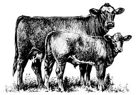 free black and white cow clipar clip art library