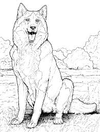 maltese animal coloring pages bestcameronhighlandsapartment com