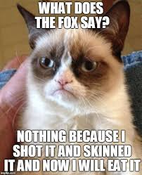 What Did The Fox Say Meme - grumpy cat meme imgflip
