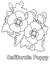 beautiful california poppy colouring colouring tube