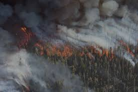 North Bay Fire Ban Status by Firesafe Marin Marin County California Fire Safe Council
