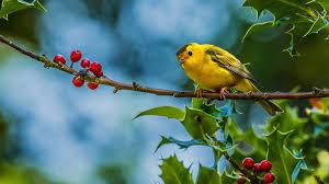 bird wallpaper bird wallpaper qygjxz