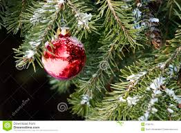 ornament on tree stock image image of selective 6766145