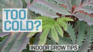 growroom too cold youtube