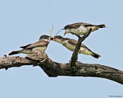 bird conservation network