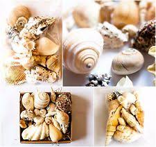 assorted seashells mixed sea shells ebay