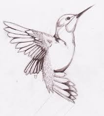 image result for drawings procreate pinterest bird sketch