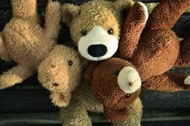 free stock photo bear bears cuddly