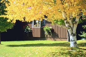 Dog In The Backyard by How To Protect A Dog From Animals In The Backyard Dog Care The