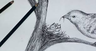 how to draw birds nest step by step pencil sketch youtube