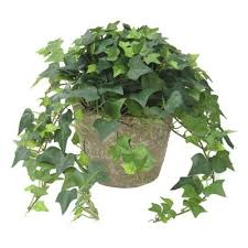 best plants for air quality top indoor plants best air filters for homeenglish ivy top