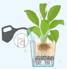 how to use you self watering container house of plants uk
