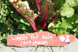 driftwood garden signs garden signs funny garden signs and