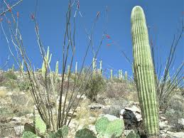 native plant native plant preservation u0026 mitigation u2013 novak environmental inc