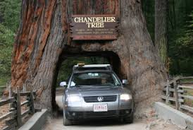 Chandelier Drive Through Tree Fun Facts Redwood National Park