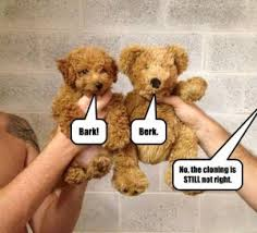 Bear Stuff Meme - 13 funniest teddy bear dog memes