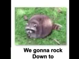 Raccoon Meme - raccoon meme electric avenue youtube