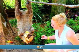 Florida wildlife tours images Florida tours things to do in florida cool destinations jpg