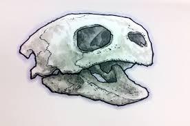 sea turtle skull mymoleskine community