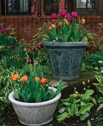 Potted Garden Ideas How To Plant Tulips In Pots Finegardening