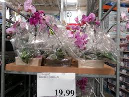orchids for sale orchids for sale yelp