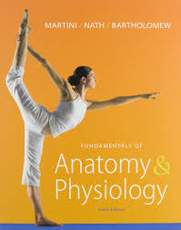 essentials of human anatomy and physiology notes human anatomy and