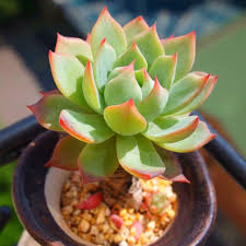 Best Low Light Plants Small Low Light Plants Promotion Shop For Promotional Small Low