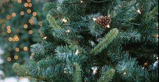 christmas tree disposal and holiday recycling tips city of orlando