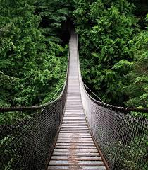 amazon en black friday 25 best amazon rainforest ideas on pinterest rainforests