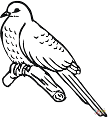 cuckoo bird coloring page free printable coloring pages