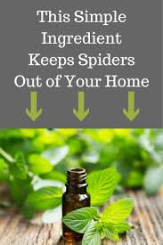 bar furniture how to keep spiders away from patio best 25 spider