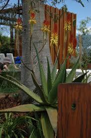 the wrap up brisbane international garden show 2015