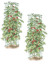 amazon com square heavy gauge extra tall tomato cage set of 2