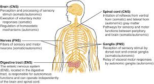 12 1 basic structure and function of the nervous system anatomy