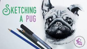 sketching a pug youtube
