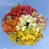 wholesale flowers all flowers at wholesale pricing global