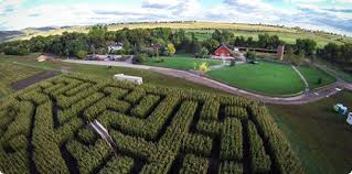Denver Botanic Gardens Corn Maze Best Corn Mazes In Colorado