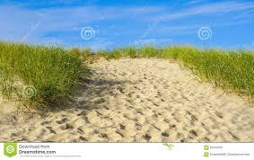 sand beach grass cape cod new england stock photo image 60168703