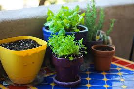 nice indoor apartment gardening 4 get inspired 10 stunning 5