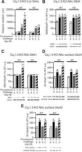 cav1 2 l type ca2 channels mediate cocaine induced glua1