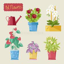 beautiful house plants beautiful house plants stock illustration illustration of house