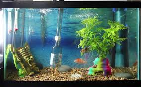 cleaning and maintaining a large aquarium essential guide