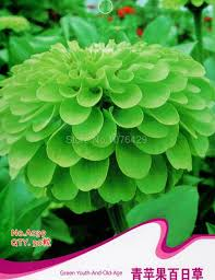 aliexpress com buy beautiful green youth and old age seeds apple