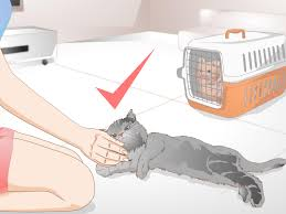 Sulphur Smell In Basement How To Get Rid Of Cat Spray Odor 12 Steps With Pictures