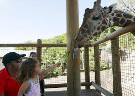 s a zoo hosting 7 u0027locals day u0027 this week san antonio express news