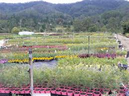 australian native plant nursery gondwana wholesale native plant nursery australia